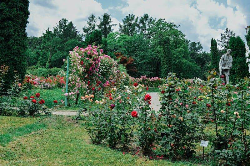 Grădina Botanică din Cluj, locul cu peste 10.000 de specii de plante